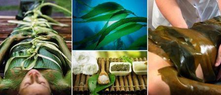 Польза морских водорослей для кожи и всего организма